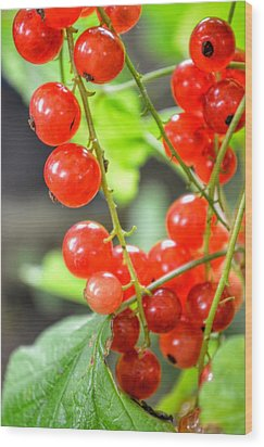 Wood Print featuring the photograph Berry Good by Isabella F Abbie Shores FRSA