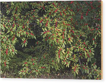 Wood Print featuring the photograph Berry Spread by Deborah  Crew-Johnson