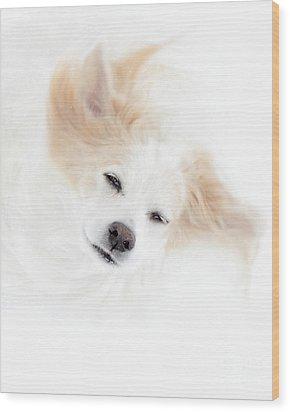Best Friend Wood Print by Sue Stefanowicz