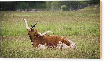 Best Friends - Texas Longhorn Magpie Wood Print by TL Mair