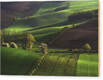 Wood Print featuring the photograph Between Green Waves by Jenny Rainbow