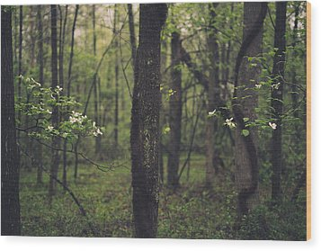 Between The Dogwoods Wood Print