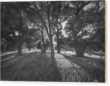 Between The Oaks Wood Print