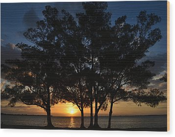 Wood Print featuring the photograph Between The Trees by Melanie Moraga