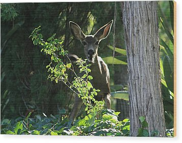 Beverly Hills Deer Wood Print by Marna Edwards Flavell