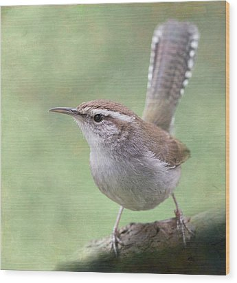 Wood Print featuring the photograph Bewick's Wren by Angie Vogel