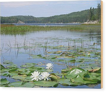 Beyond The Lilly Pads Wood Print by Peter  McIntosh