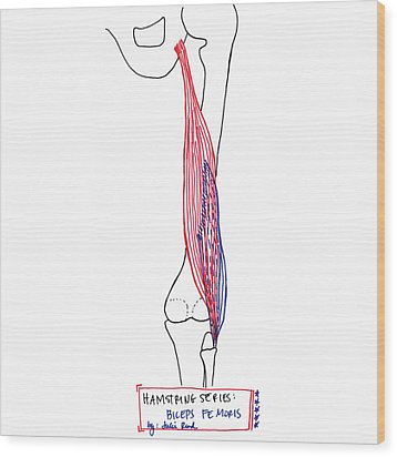 Biceps Femoris Wood Print