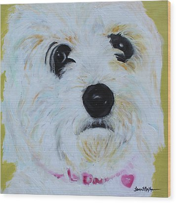 Wood Print featuring the painting Bichon Frise-king Charles Cavalier Spaniel Mix - Molly by Laura  Grisham