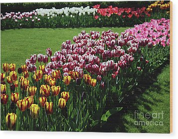 Multicolor Tulips Wood Print