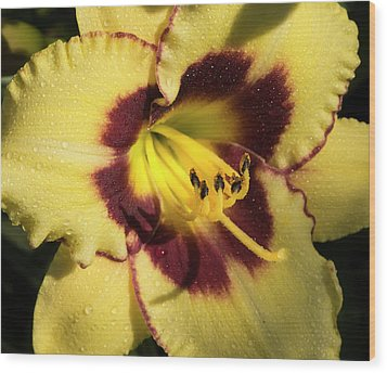 Wood Print featuring the photograph Bicolored Lily by Jean Noren