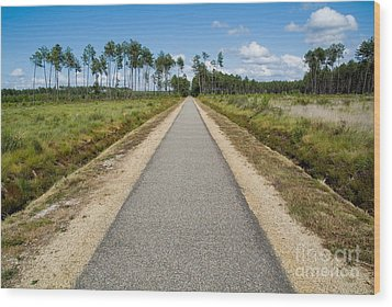 Bicycle Track Passing Through The Landes Forest Wood Print by Sami Sarkis
