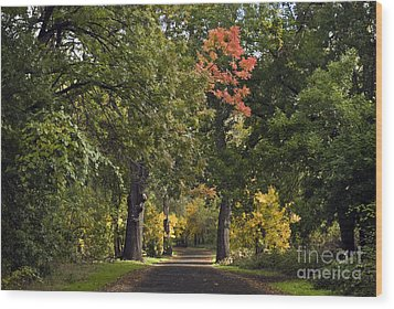 Bidwell Park By One Mile Wood Print