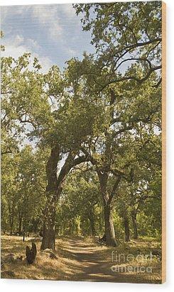 Bidwell Park Oak Tree Wood Print