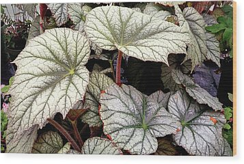 Big Begonia Leaves Wood Print by Nareeta Martin