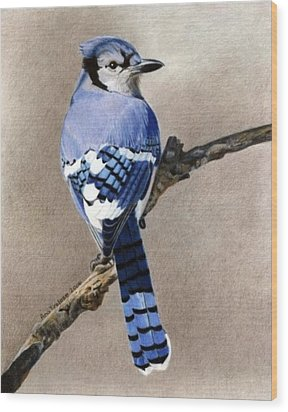 Wood Print featuring the drawing Big Blue Jay by Ana Tirolese