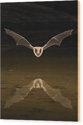 Big Brown Bat Reflection Wood Print by Scott  Linstead