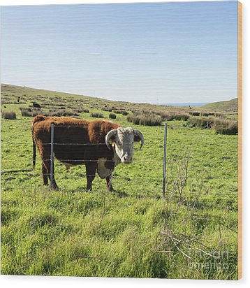 Wood Print featuring the photograph Big Bull At Point Reyes National Seashore California Dsc4884-sq by Wingsdomain Art and Photography