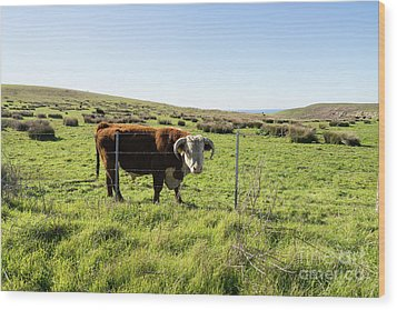 Wood Print featuring the photograph Big Bull At Point Reyes National Seashore California Dsc4884 by Wingsdomain Art and Photography