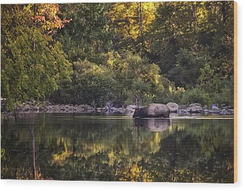 Big Bull In Buffalo National River Fall Color Wood Print by Michael Dougherty