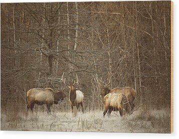 Wood Print featuring the photograph Big Bull Meeting In Boxley Valley by Michael Dougherty