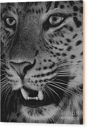 Wood Print featuring the painting Big Cat II by Louise Fahy