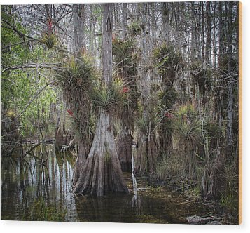Big Cypress Preserve Wood Print by Bill Martin