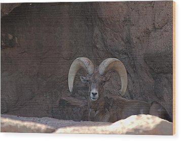 Wood Print featuring the photograph Big Horn Ram by Daniel Hebard