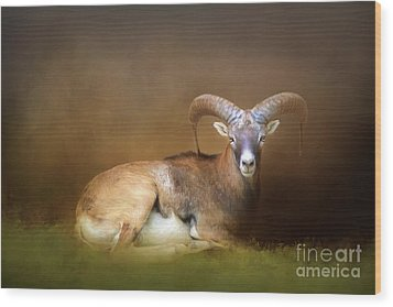 Big Horn Sheep Wood Print by Marion Johnson