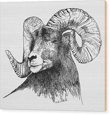 Big Horned Sheep Wood Print