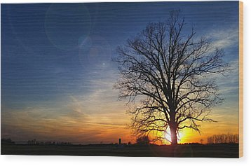 Big Oak Splendor Wood Print