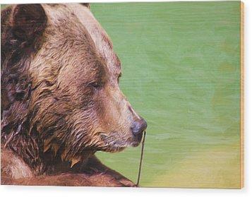Big Old Bear With A Tiny Stick Wood Print by Karol Livote