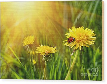 Big Yellow Dandelions In The Tall Grass Wood Print by Sandra Cunningham