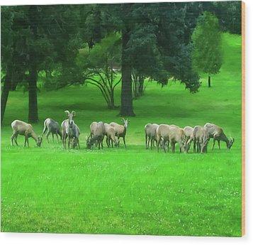 Wood Print featuring the digital art Bighorn Sheep Ewes  by Chris Flees