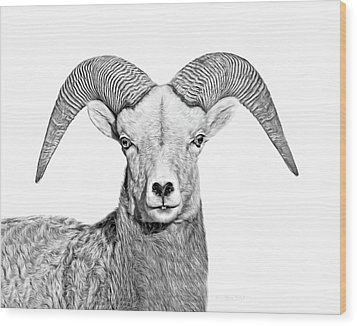 Wood Print featuring the photograph Bighorn Sheep Ram Black And White by Jennie Marie Schell