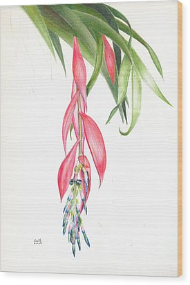 Billbergia 'windii' Wood Print
