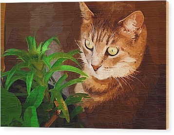 Wood Print featuring the photograph Bink by Donna Bentley
