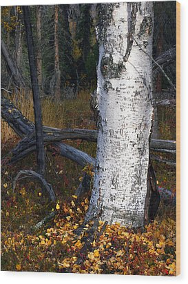 Birch Autumn 3 Wood Print by Ron Day