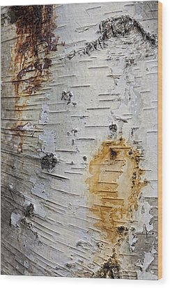 Birch Bark 2 Wood Print