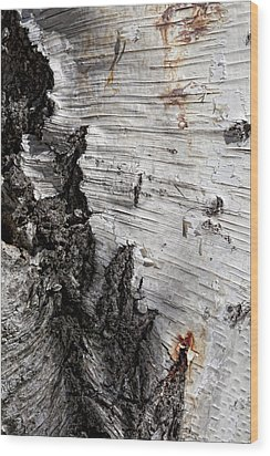 Birch Bark Wood Print