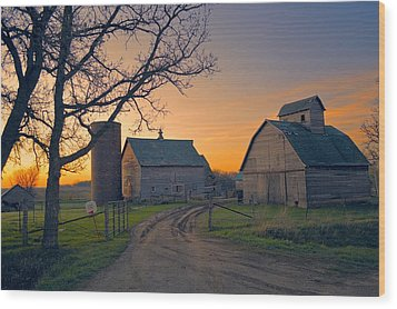 Birch Barn 2 Wood Print