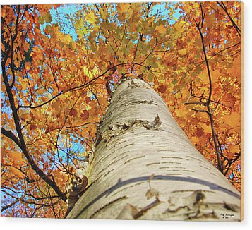 Birch Beauty Wood Print