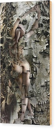 Birch Beauty Wood Print by Tlynn Brentnall