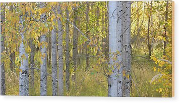 Birch Forest Wood Print by Bonnie Bruno