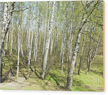 Birch Forest In Spring Wood Print by Irina Afonskaya