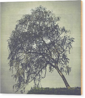 Wood Print featuring the photograph Birch In The Mist by Ari Salmela