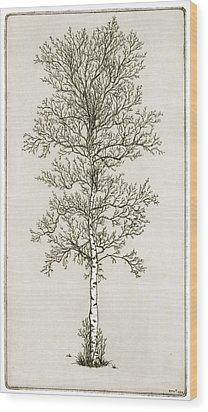 Birch Tree Wood Print by Charles Harden