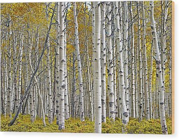 Birch Tree Grove With A Touch Of Yellow Color Wood Print