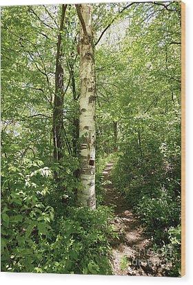 Birch Tree Hiking Trail Wood Print by Phil Perkins