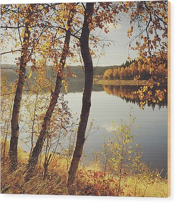 Birch Trees And Reflected Autumn Colors Wood Print by Stefan Mendelsohn
